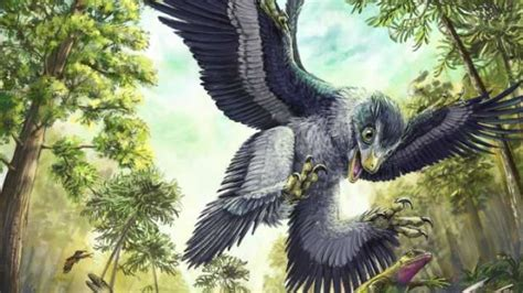 Cretaceous Birds Survived Mass Extinction By Eating Seeds