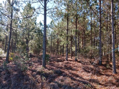 Ware County, GA Hunt Lease – LEASED | Saunders Real Estate