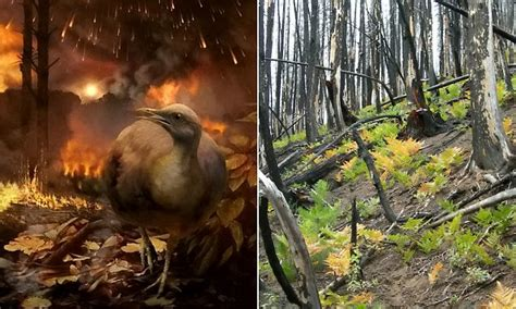 How birds survived asteroid that wiped out dinosaurs 66m